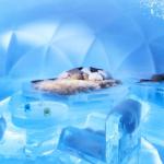 «Alpha Resort Tomamu's Ice Hotel» в Японии