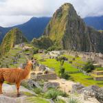 Лама в Мачу-Пикчу в Перу