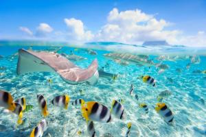Подводный мир Бора-Бора