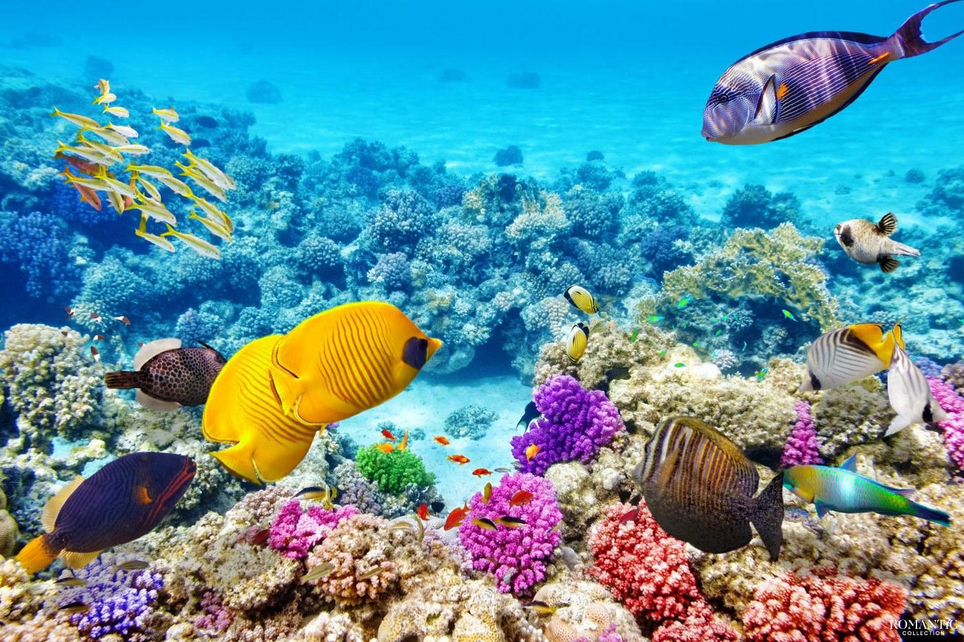 Краски Большого Барьерного рифа у берегов Австралии