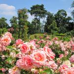Цветущие сады парка Багатель