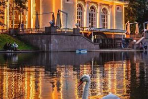 Лебедь на Патриарших прудах