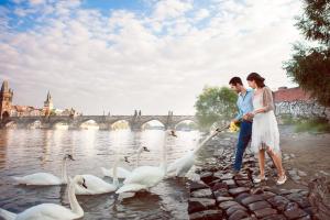 Влюбленные кормят лебедей