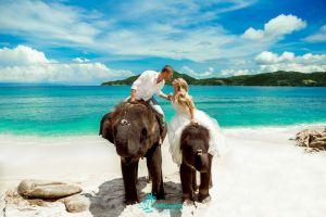 Свадебная церемония на слонах