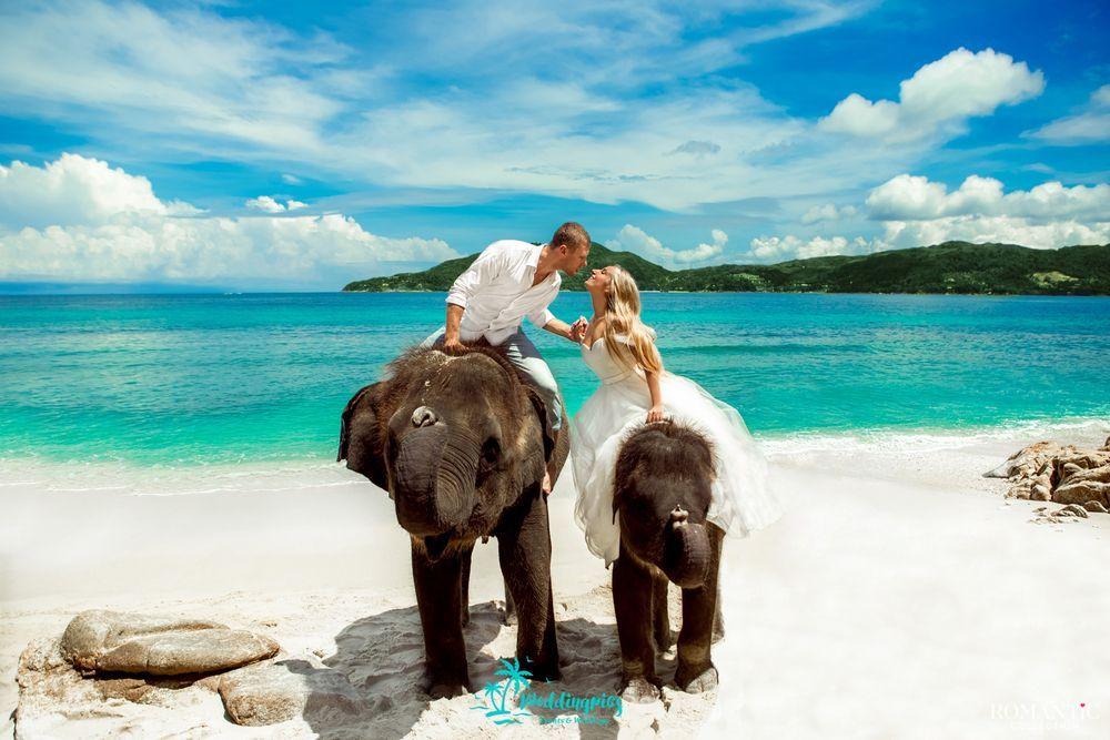 Свадьба с прогулкой на слоне