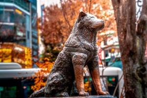 Памятник Хатико в Токио осенью